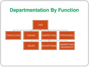 departmentation by function