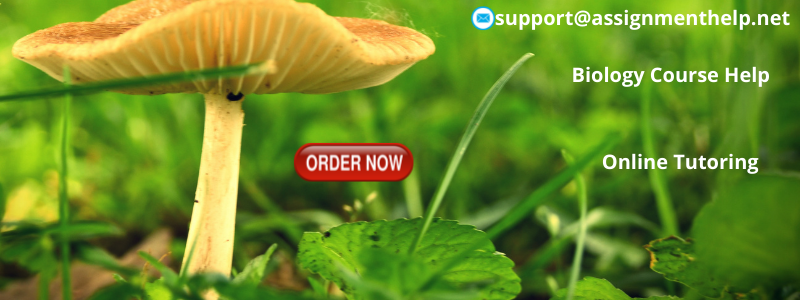 biology assignment help biology homework help help  biology assignment help