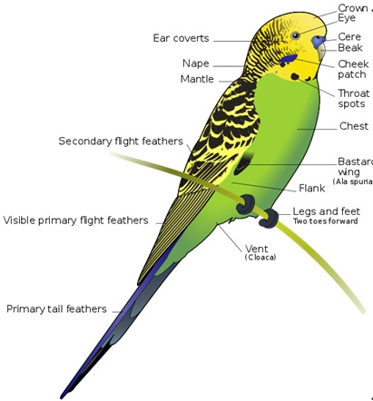 classification of Aves
