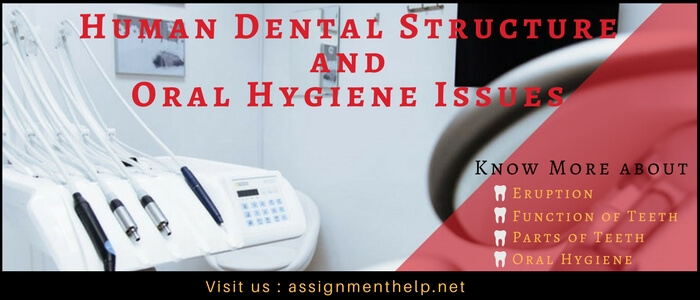 human dental structure and oral hygiene issues