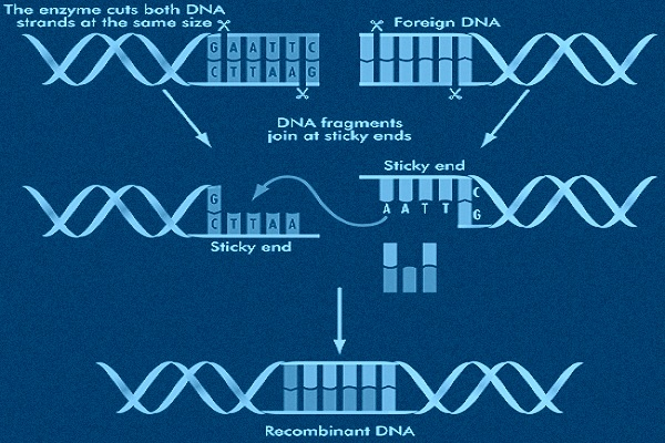 Recombinant dna technology help code