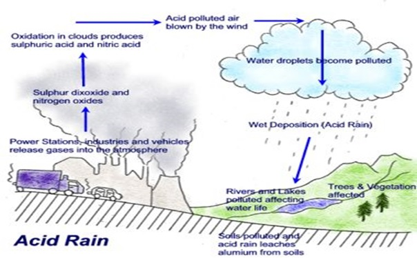 Acid Rain With Example Of Occurrence Assignment Help Essay On History