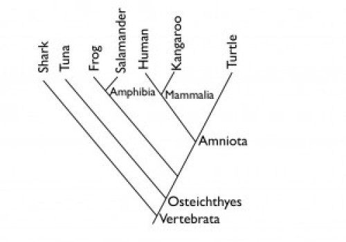 complicated example mammals