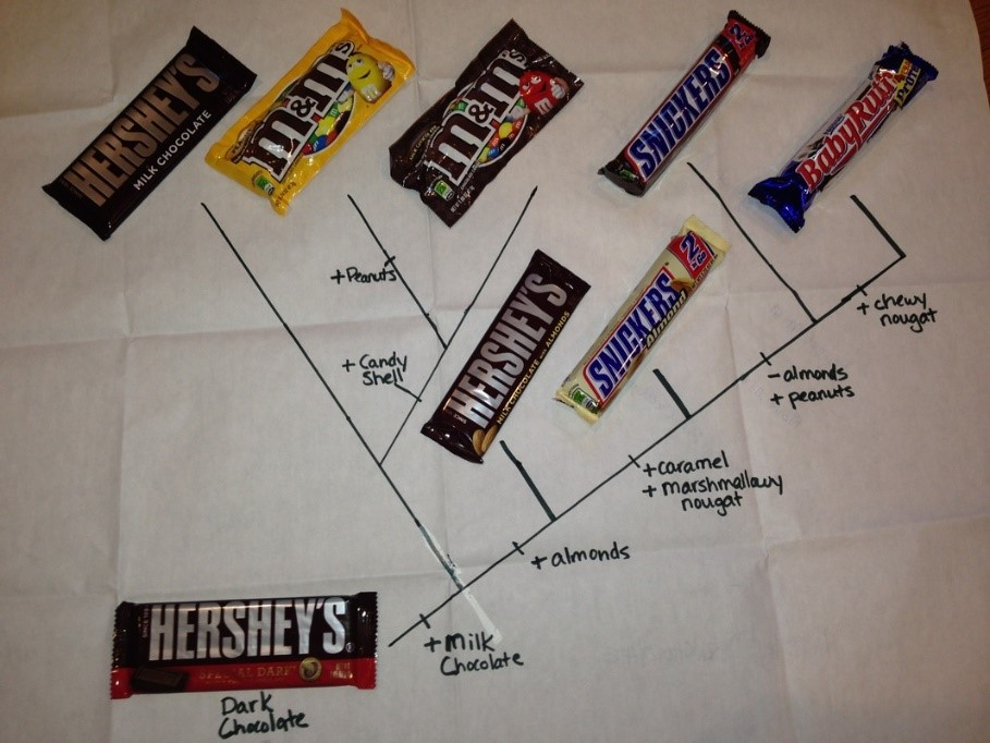 EXAMPLE Candy Cladogram