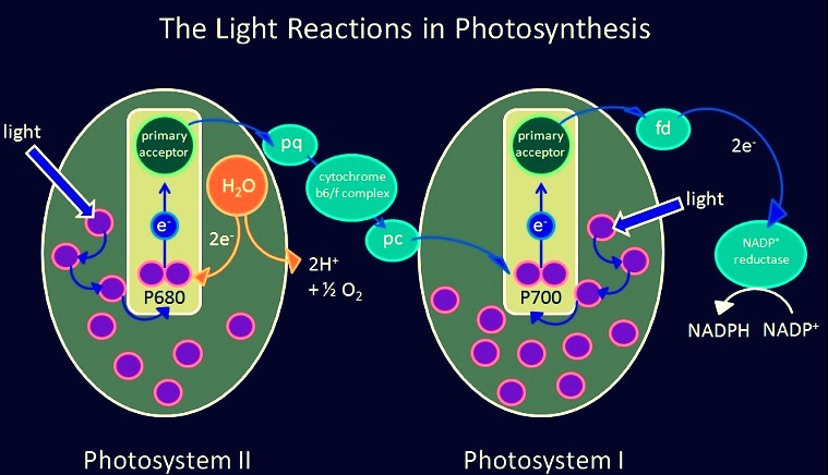 Photosynthesis help code