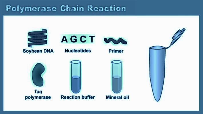 polymerase-chain-reacton help cod